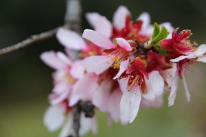 florecer con PNL